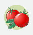 two ripe tomatoes with leaf harvest juicy fruit vector image