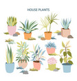 house plants collection vector image vector image