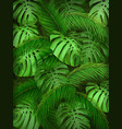 summer tropical leaf background vector image vector image