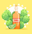 tequila bottle with lime and cactus vector image