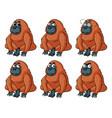 urangutan with different emotions vector image vector image