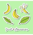 set of bananas vector image