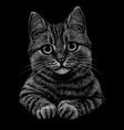 cat black and white monochrome portrait vector image