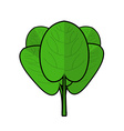 Spinach isolated Bunch of green Fresh green leaf vector image vector image