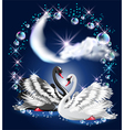Black and white swans vector image vector image