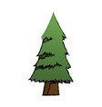 cartoon pine tree natural plant conifer image vector image vector image