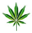 green hemp leaf or cannabis leaf vector image
