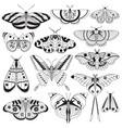monochrome tropic butterflies silhouettes vector image