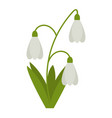 snowdrops flower flat icon wild flowers plant vector image vector image