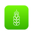 wheat icon green vector image vector image