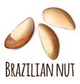 brazilian nut icon realistic style vector image vector image