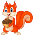 Cartoon funny squirrel holding acorn isolated vector image