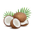 coconut fresh tropical opened coco fruit with vector image