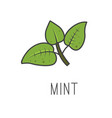 mint line cooking isolated vector image