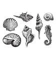set hand-drawn seashells various shapes vector image