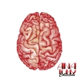 Anatomy collection - brain vector image