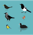 bird collection vector image vector image