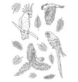 set parrots on white background vector image