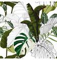 tropical bamamas monstera leaves vector image vector image