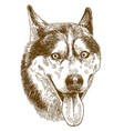 engraving drawing of husky dog head vector image vector image
