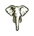 head of african elephant vector image vector image