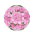 pink peony bouquet in round shape isolated on vector image vector image