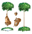 trap for squirrel hang animal and with broken paw vector image