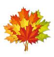 bouquet autumn leaves vector image vector image