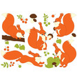 Squirrel Set vector image vector image