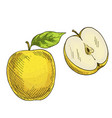 yellow apple with leaf half of apple vector image vector image