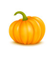 large pumpkin on white vector image vector image