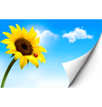 Nature background with yellow sunflower vector image vector image