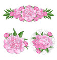 Tender pink peonies set with blossom flowers vector image