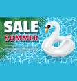 white swan banner vector image vector image