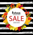 autumn sale round background with colorful leaves vector image vector image