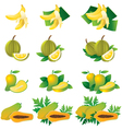 Banana Durian Mango Papaya vector image
