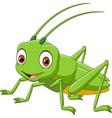 cartoon happy grasshopper vector image vector image