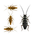 oriental and german cockroaches vector image vector image