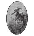 sea horse vintage vector image vector image