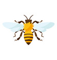 stylized bee icon for food or vector image
