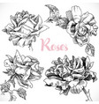 black and white drawing a set roses flower vector image