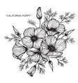 california poppy flower drawing vector image
