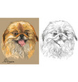 colored and black and white pekingese dog vector image vector image