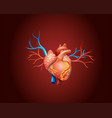 diagram showing human heart vector image vector image