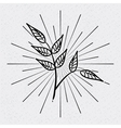 leafs drawing design vector image
