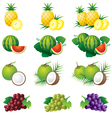 Pineapple Watermelon Coconut Grape vector image vector image
