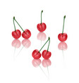 set of perfect sweet cherries isolated on white vector image vector image