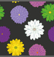 multicolor spring meadow flowers seamless black vector image vector image