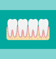 tooths icon with gum vector image vector image
