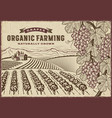 grapes organic farming landscape vector image